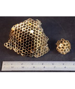 WASP NEST 2 PAPER WASPS HORNET HIVE NESTS Taxidermy Science or Art Project - $9.89