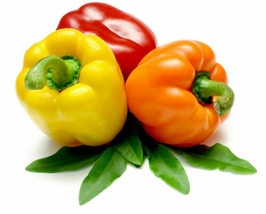 X100 Sweet Pepper Seeds. Free Shipping - $7.02