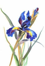 "Akimova: IRIS, flower, garden, purple, blue, approx. size 7""x10.5"" - $10.00"