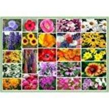 Non GMO Bulk Northeast Wildflower Seed Mix 25 Species of Wildflower Seed... - $1,633.50