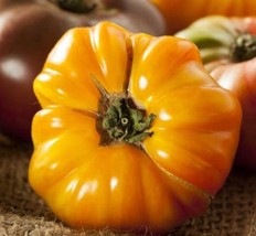 35 ps of Amana Orange Tomato seeds - $5.96
