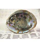 Natural Abalone Seashell Paua Shell Smudging bowl 5-1/4 Inch  - $7.95