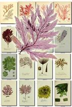 ALGAE-1 Collection of 80 seaweeds vintage image... - $6.99