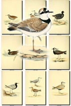 BIRDS-104 Collection of 57 vintage pictures San... - $6.99