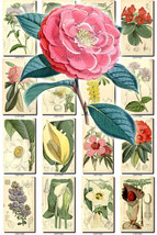 FLOWERS-75 Collection of 265 vintage images Beg... - $6.99