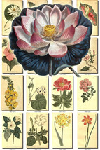 FLOWERS-6 Collection of 276 vintage images vege... - $6.99
