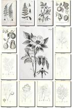BOTANICAL-18-bw Collection of 224 black-and-white vintage images illustr... - $4.95