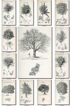 BOTANICAL-19-bw Collection of 307 black-and-white vintage images illustr... - $4.95