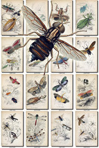 INSECTS-34 Collection of 41 vintage illustrations Flies Fly Beetle small... - $6.99