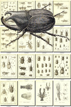 INSECTS-52-bw Collection of 237 vintage illustrations Beetles Cleoptera ... - $4.95