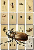 INSECTS-47 Collection of 200 vintage illustrations Coleoptera cicadas fl... - $6.99