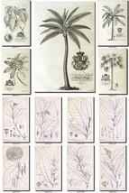 BOTANICAL-23-bw Collection of 375 black-and-white vintage images illustr... - $4.95
