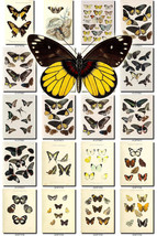 BUTTERFLIES-52 Collection of 199 vintage illustrations clipart pictures ... - $4.99