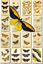 BUTTERFLIES-51 Collection of 197 vintage illustrations natural collage p... - $4.99
