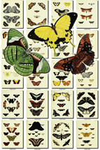 BUTTERFLIES-55 Collection of 203 vintage illustrations natural collages ... - $4.99