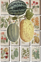 FLORA-9 Collection of 333 vintage illustrations... - $4.99