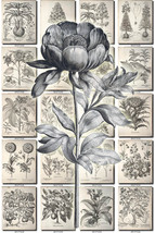 FLORA-5-bw Collection of 416 black-and-white vi... - $4.95