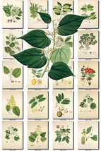 FLORA-7 Collection of 344 vintage illustrations... - $4.99