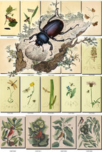 FLORA and FAUNA-9 Collection of 251 vintage ill... - $4.99