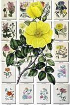 FLOWERS-124 Collection of 75 vintage images Iris Rose Malva Poppy Nastur... - $6.99