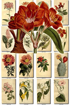 FLOWERS-8 Collection of 262 vintage images Aloe... - $6.99