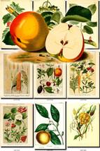 FRUITS VEGETABLES-15 Collection of 65 vintage i... - $6.99