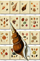SHELLS-18 Collection of 228 vintage images scrap pearl mollusks clamshel... - $4.99