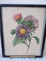 Vintage Aster Chinensis Bessin Lito Print - $7.99