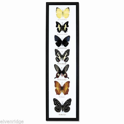 Framed Collection of Seven Butterflies