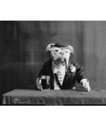 Bull Dog Bartender 1905 8x10 Reprint Of Old Photo - $20.20