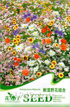 1 Bag 200 Seed Waterlogging Tolerance wildflowe... - $0.99
