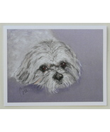 Shih Tzu Dog Art Note Cards By Cori Solomon - $12.50