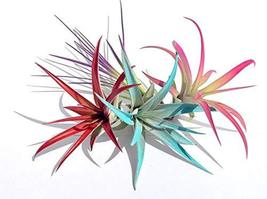 Air Plant Fun Pack Mix of 32 Plants Airplant, Tillandsia, Wedding Favors... - $237.01