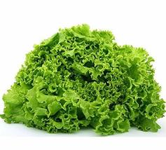 Green Salad Bowl Lettuce Seeds - 100 Count Seed Pack - Non-GMO - A Heat-Tolerant - $2.99