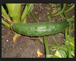 13 thumb155 crop