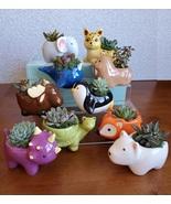 Ceramic Animal Planter with Live Succulent, Elephant Cat Penguin Bear Wh... - $16.99