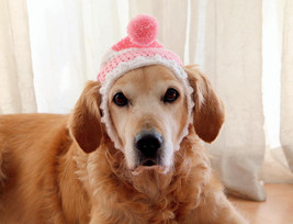 Dog Hat, Dog Beanie, Winter Hat for Dogs, Large Breed Dog Hat, Beanie fo... - $16.95