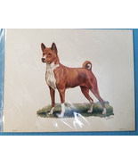Basenji Hound  Dog Lithograph Art Print Picture by Ole Larsen 1950's - $34.95
