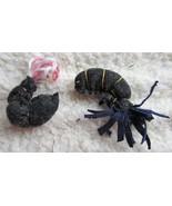 Shrimp Catnip Toy - $3.50