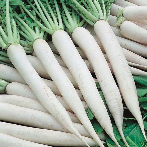 Giant White Radish SEEDS ? Mino Early, Asian Vegetable - Japanese Unique Radish