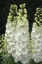 100 White Delphinium Seeds Perennial Garden Flower Flowres Bloom - TTS - $23.95