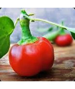 Pepper, Large HOT Cherry, Heirloom, 100 Seeds, Great Fresh N Cooked - $5.99