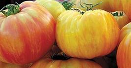 10 Seeds of Copia Tomato - Solanum lycopersicum - $11.74