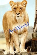 Digital download,Lion,Photography,Art,Christmas decor,Home decor wall,Pr... - $10.00