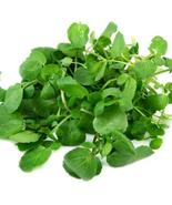 SHIP FROM US 1 Million True Watercress Seeds - Garden or Microgreen, ZG09 - $246.36