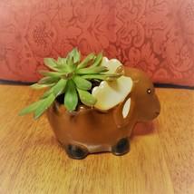 "Echeveria Succulent in Ceramic Animal Planter, 5"" Brown Moose Glazed Pot + Plant image 3"