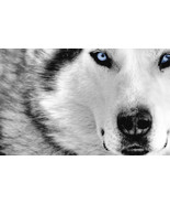 """""""Make me a succesful person"""" Lightwork wolf spirit totem package 31 days 2 times - $490.00"""