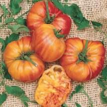 Rainbow Tomato Seeds | Big Rainbow Heirloom Tomato Seeds | 10 seeds - $10.98