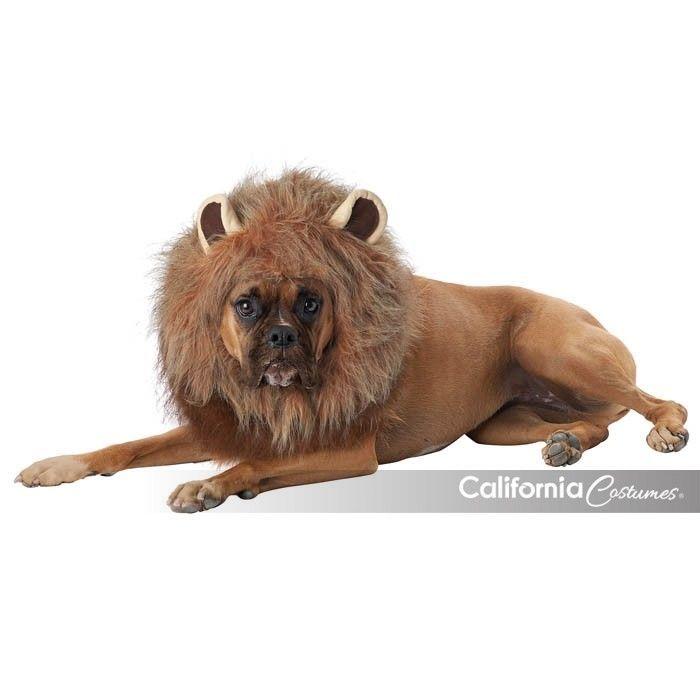 California Costumes Roi de Jungle Lion Chien Animal Compagnie Halloween PET20166