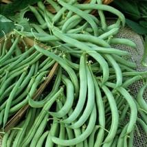 Bean Seeds - Bush - Tendergreen - Vegetable Seeds - Outdoor Living - Garden - $34.99+